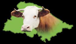 Govedorejsko društvo Lisaste pasme Ljutomer – Križevci